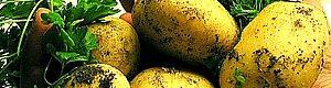 Картопля і її користь